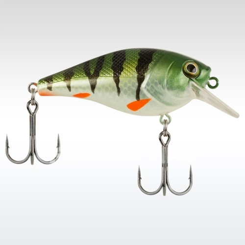 Berkley SquareBull Euro Perch